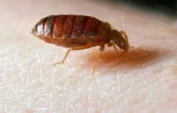 Ce facem cu insectele daunatoare ?