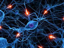 Constiinta si culturile de neuroni