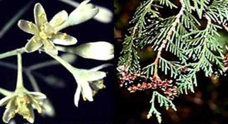 Plantele biblice