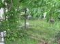 Vand loc de veci Cimitirul Straulesti 2
