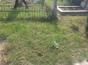 Vand loc de veci situat in cimitirul Berceni 2