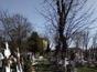 Vand 2 locuri de veci in cimitirul Bucurestii Noi, zona centrala, cu soclu.