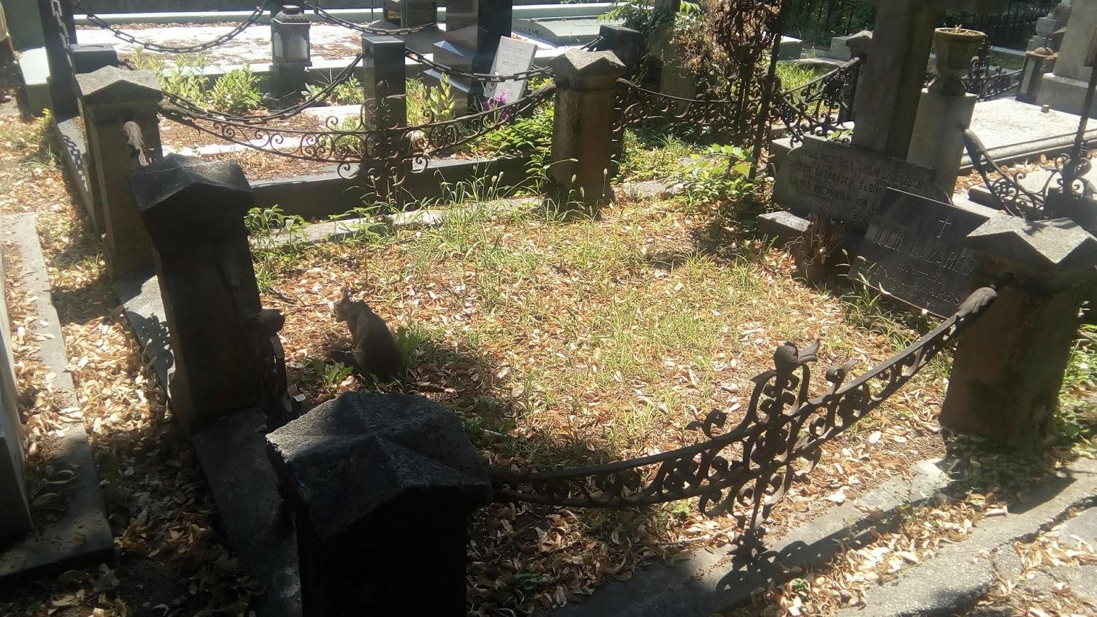Cimitir Bellu, Bucuresti. Vand urgent loc de veci: 10.5mp. Pret 10900 euro.