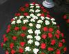 Coroana funerara garoafe rosii cu alb