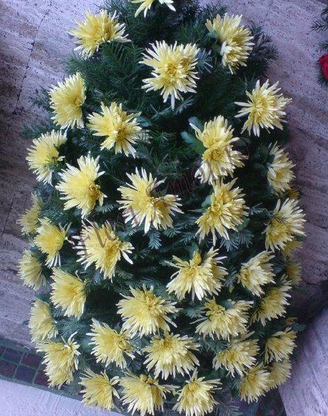 Jerba din crizanteme